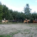 konie osada lato 2012 006