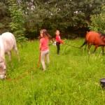 konie polkolonia 056