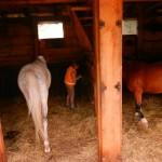 konie polkolonia 065