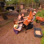 konie polkolonia 084