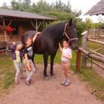 konie polkolonia 101