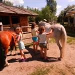 konie polkolonia 185