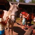 konie polkolonia 190