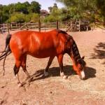 konie polkolonia 196