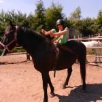 konie polkolonia 220