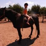 konie polkolonia 225
